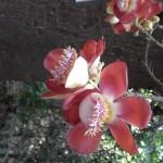 Medicinal Garden Visit (4)