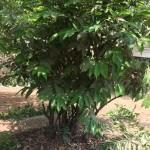 Medicinal Garden Visit (7)